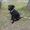 нашелся щенок черного цвета #100631