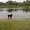 Пропала собака черная с белым #721622