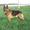 щенков немецкой овчарки #960548