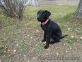 нашелся щенок черного цвета