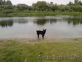 Пропала собака черная с белым